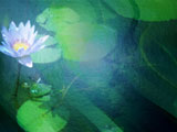 PowerPoint Template Water Lilies